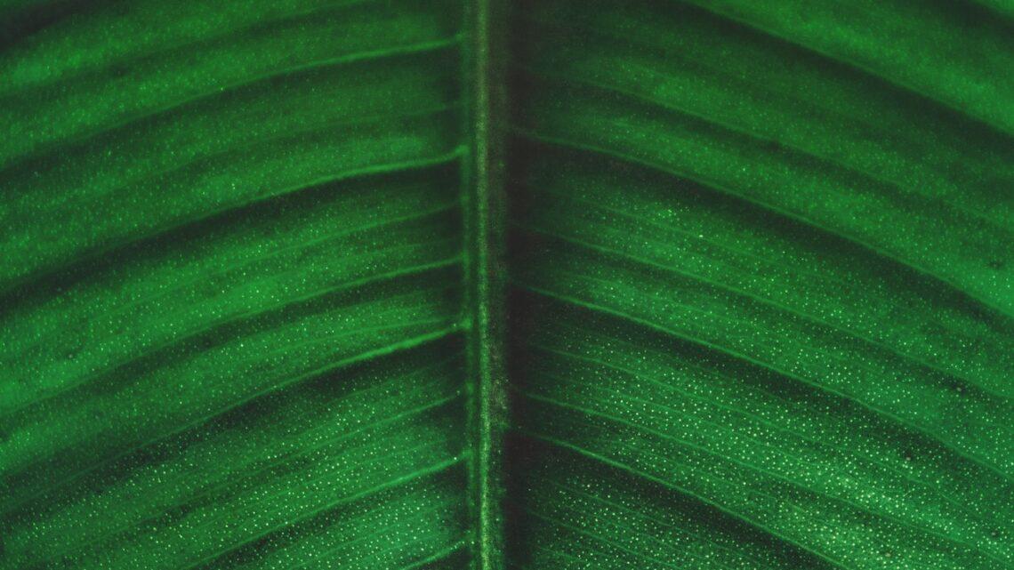 Klimakompenseret pakke – Hvad er fidusen?