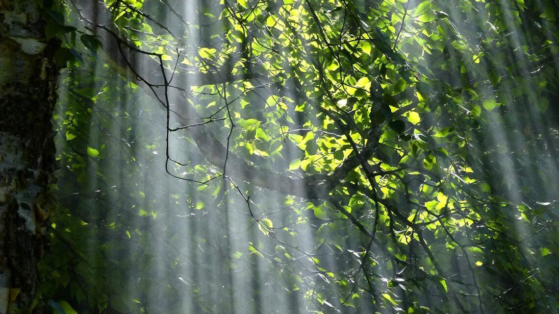 Grøn livsstil i Østjylland